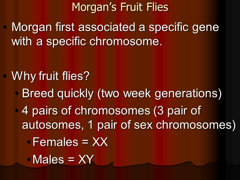 Morgan first associated a specific gene with a specific chromosome.