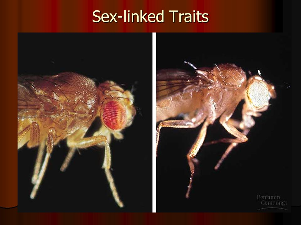 Sex-linked Traits
