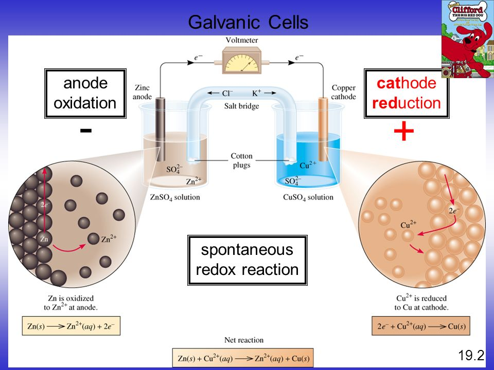 - + Galvanic Cells anode oxidation cathode reduction spontaneous