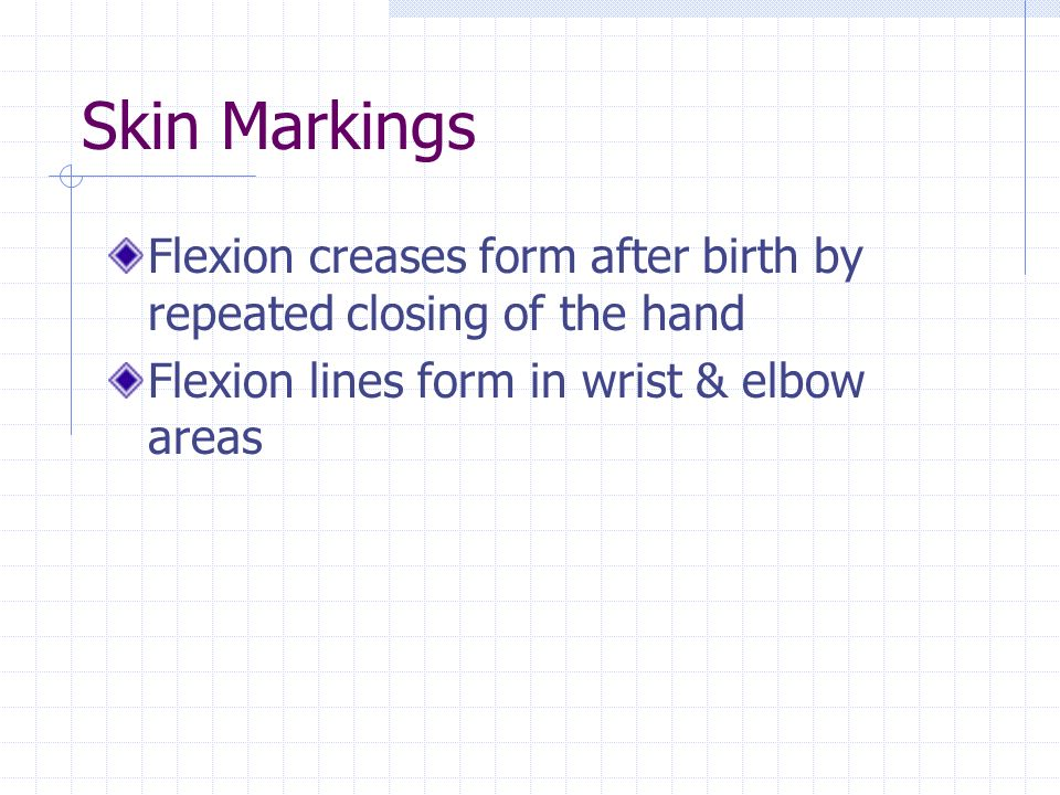 Skin Markings Flexion creases form after birth by repeated closing of the hand.