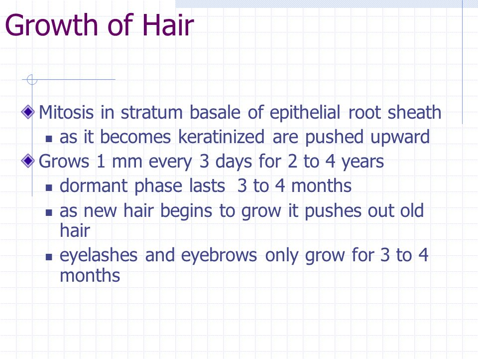 Growth of Hair Mitosis in stratum basale of epithelial root sheath