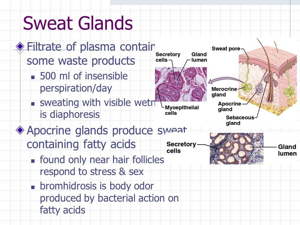 Sweat Glands Filtrate of plasma containing some waste products