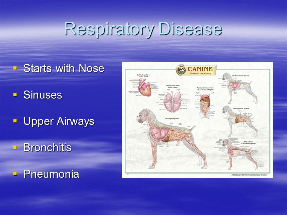Respiratory Disease Starts with Nose Sinuses Upper Airways Bronchitis