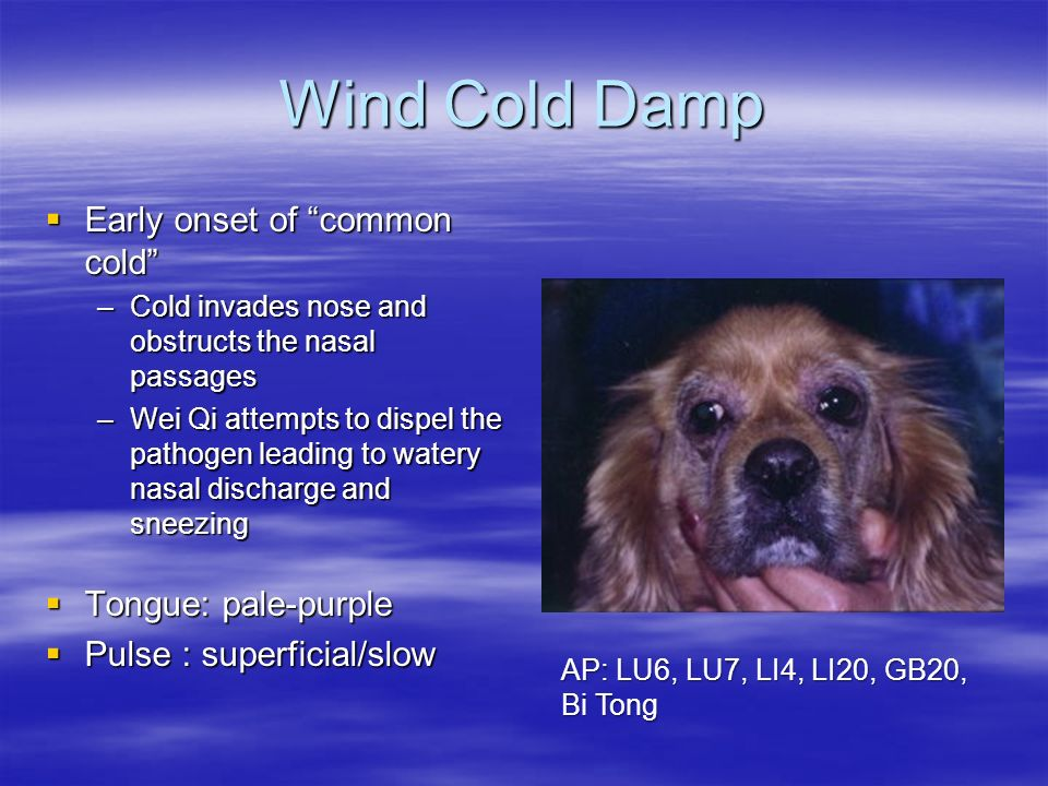 Wind Cold Damp Early onset of common cold Tongue: pale-purple