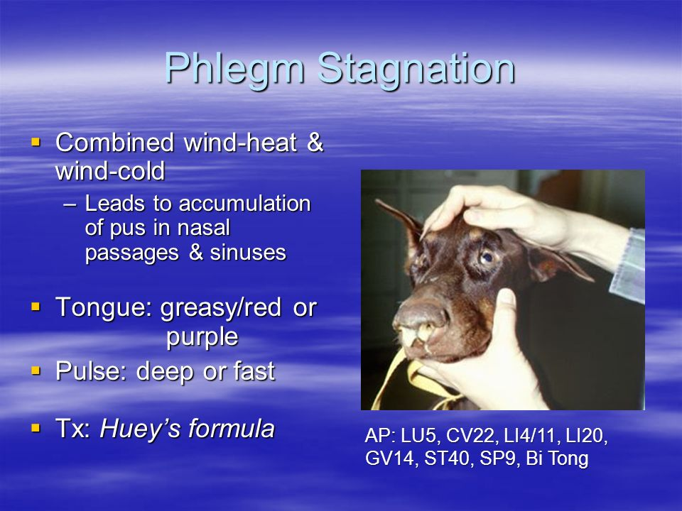 Phlegm Stagnation Combined wind-heat & wind-cold