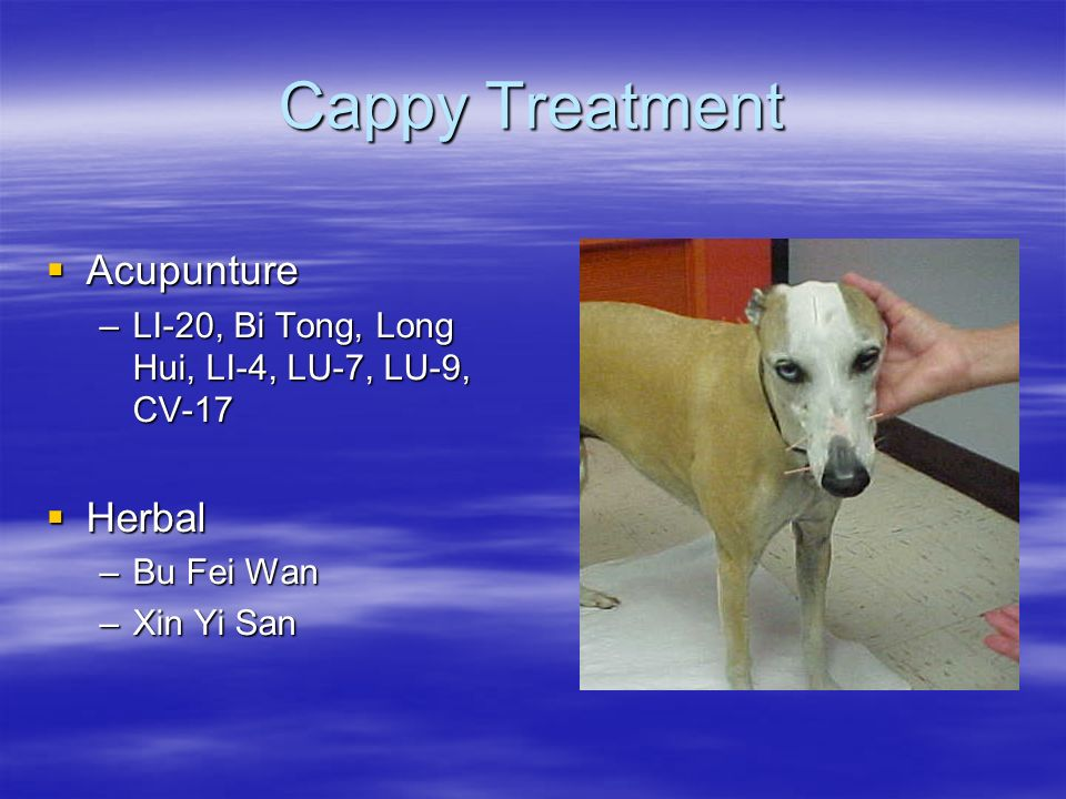 Cappy Treatment Acupunture Herbal