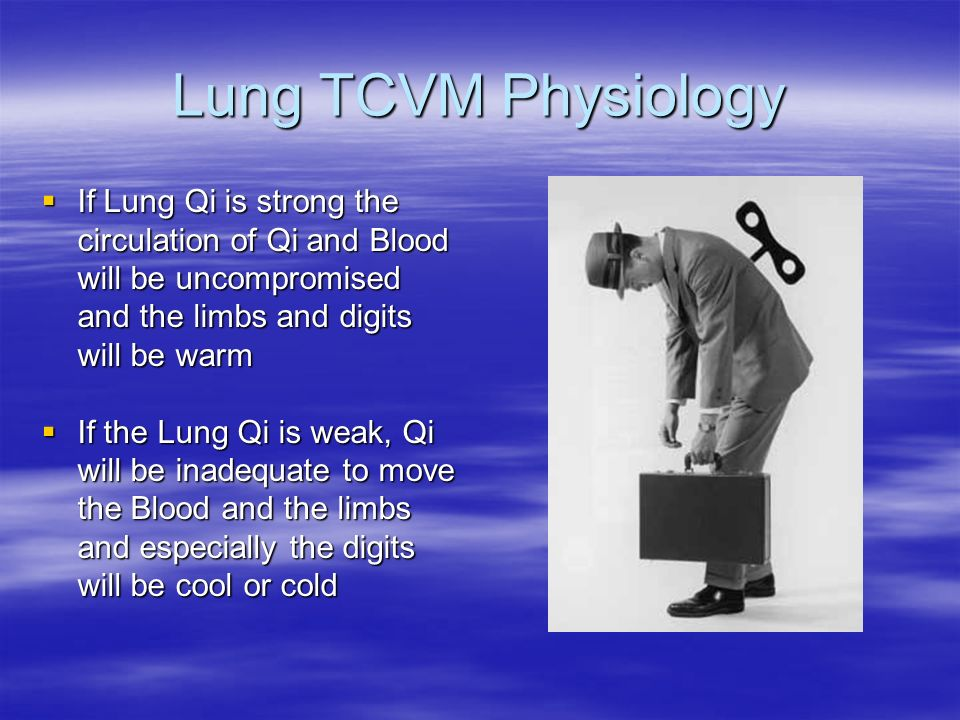 Lung TCVM Physiology If Lung Qi is strong the circulation of Qi and Blood will be uncompromised and the limbs and digits will be warm.