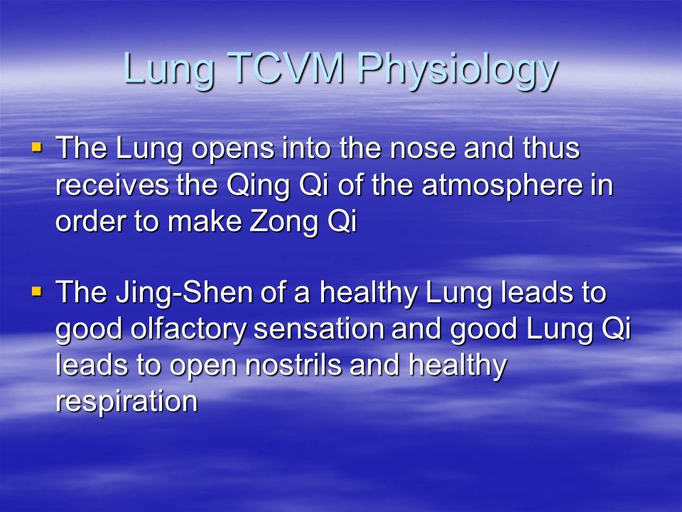 Lung TCVM Physiology The Lung opens into the nose and thus receives the Qing Qi of the atmosphere in order to make Zong Qi.