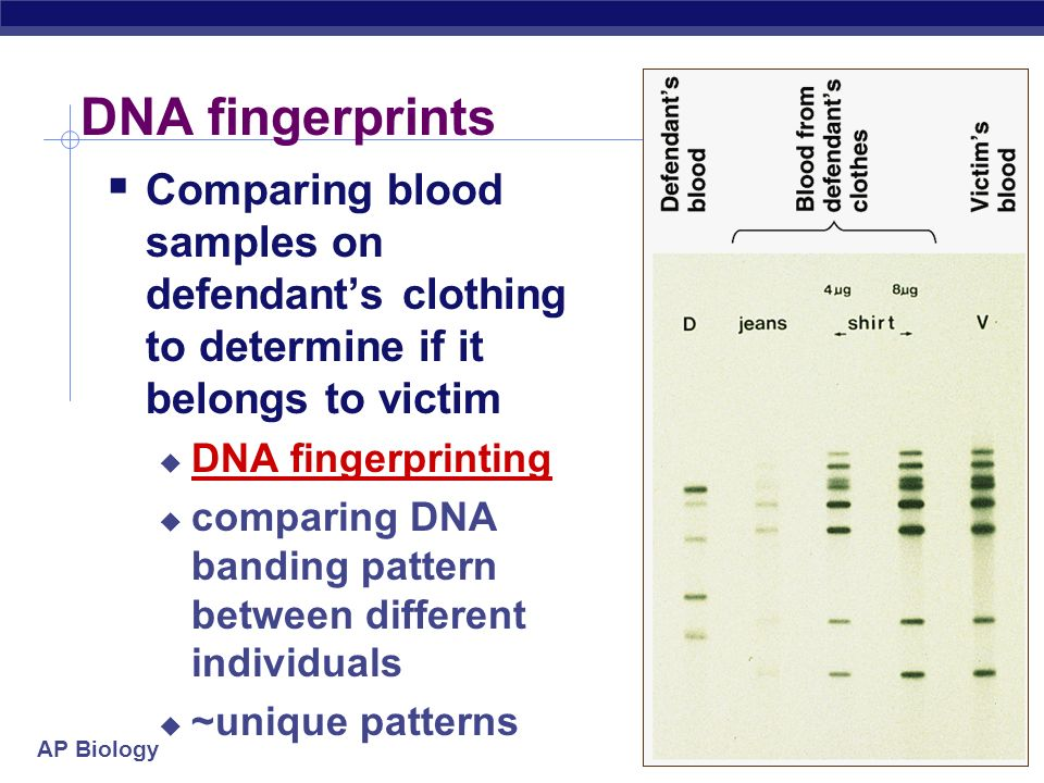 DNA fingerprints Comparing blood samples on defendant's clothing to determine if it belongs to victim.