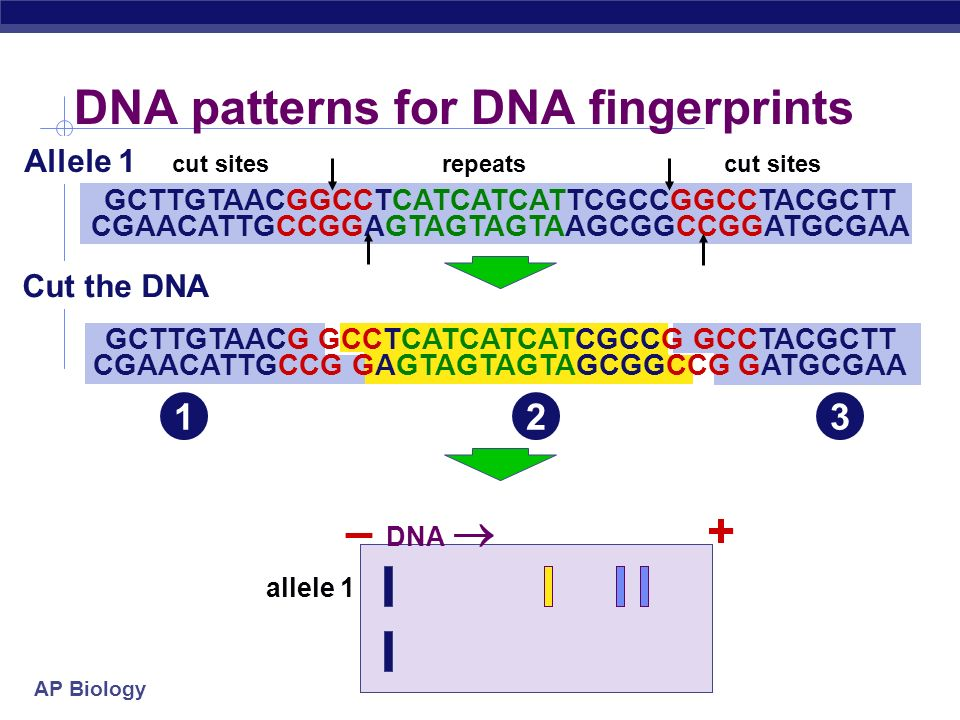 DNA patterns for DNA fingerprints