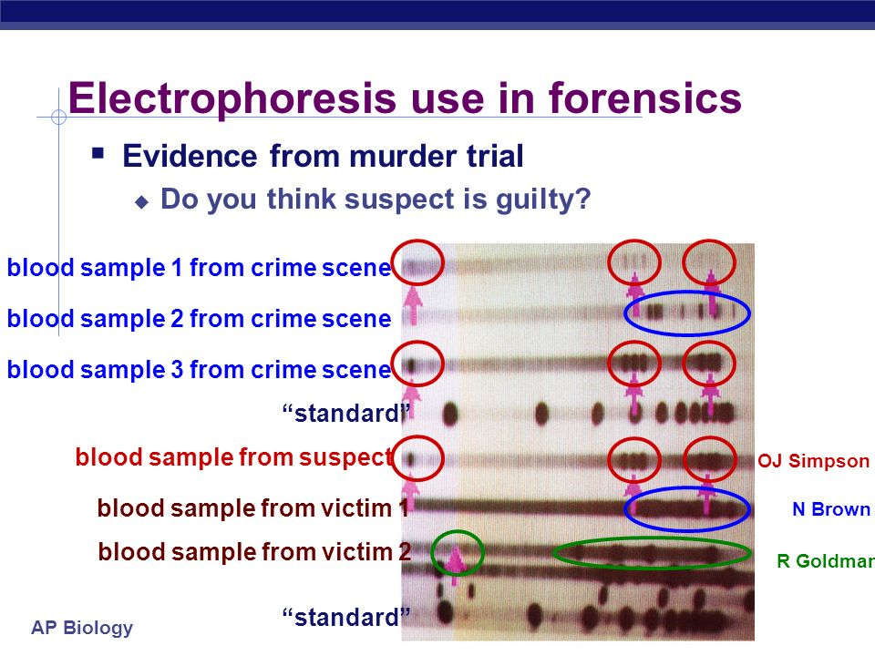 Electrophoresis use in forensics
