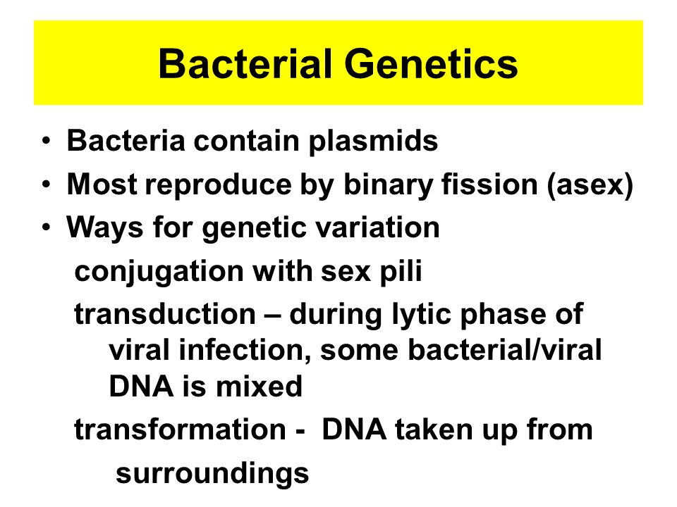 Bacterial Genetics Bacteria contain plasmids