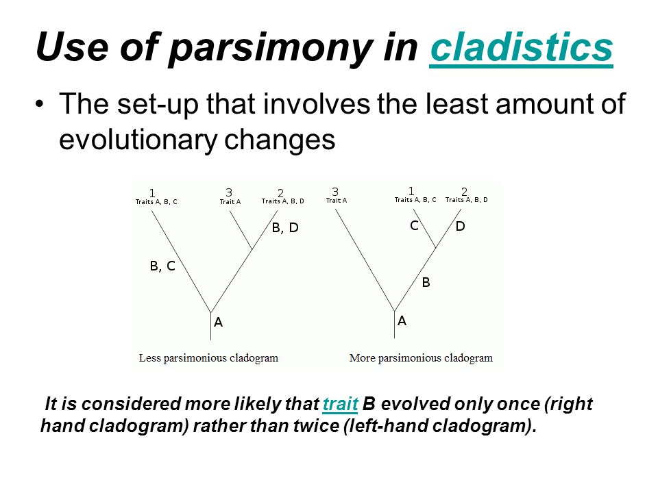 Use of parsimony in cladistics