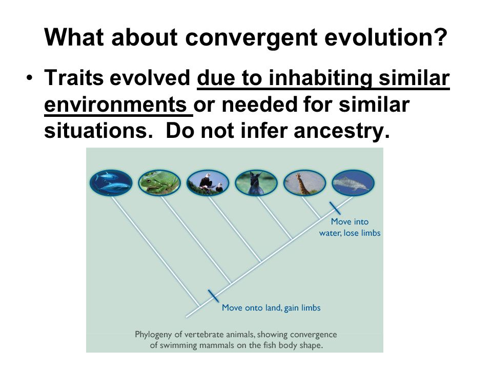 What about convergent evolution