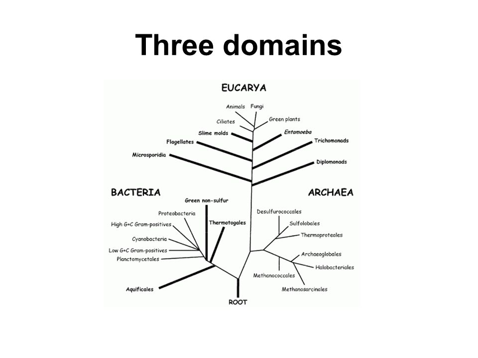 Three domains