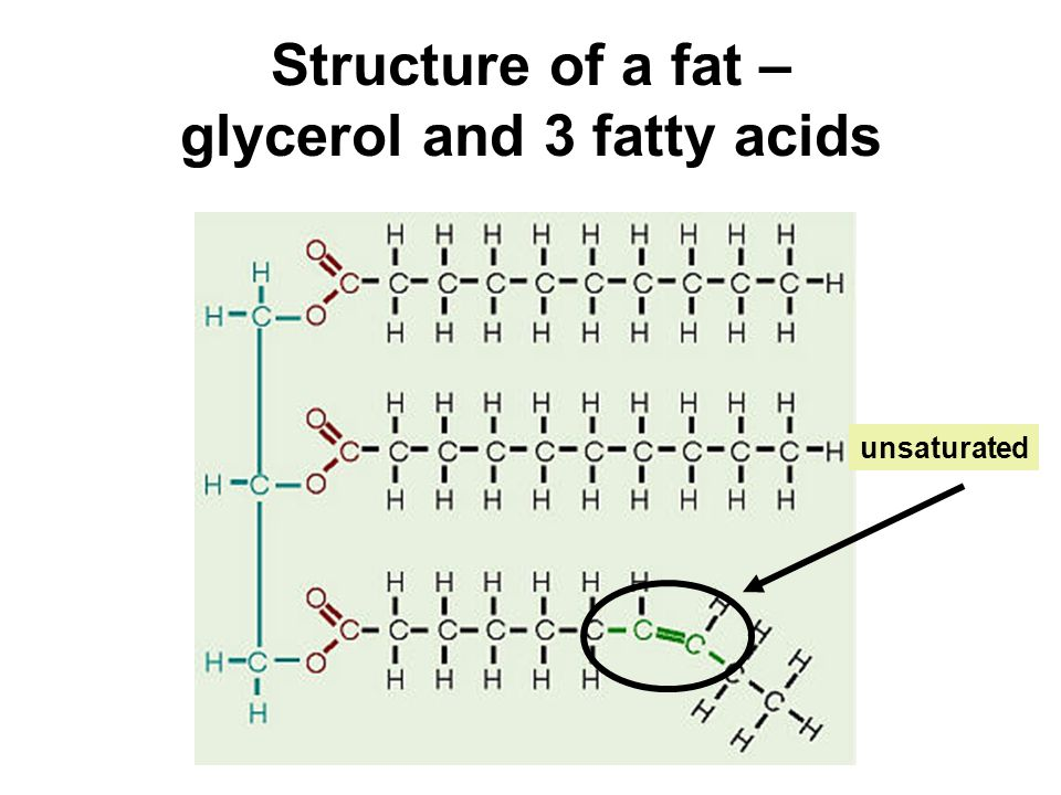 Structure of a fat – glycerol and 3 fatty acids