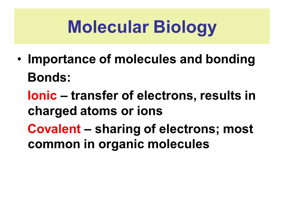 Molecular Biology Importance of molecules and bonding Bonds: