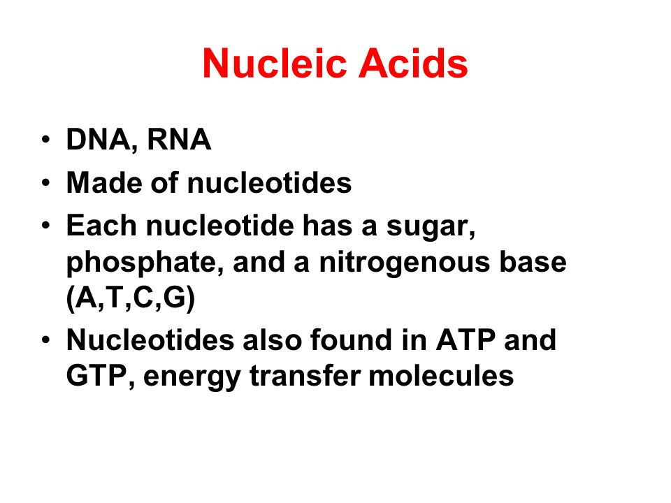 Nucleic Acids DNA, RNA Made of nucleotides
