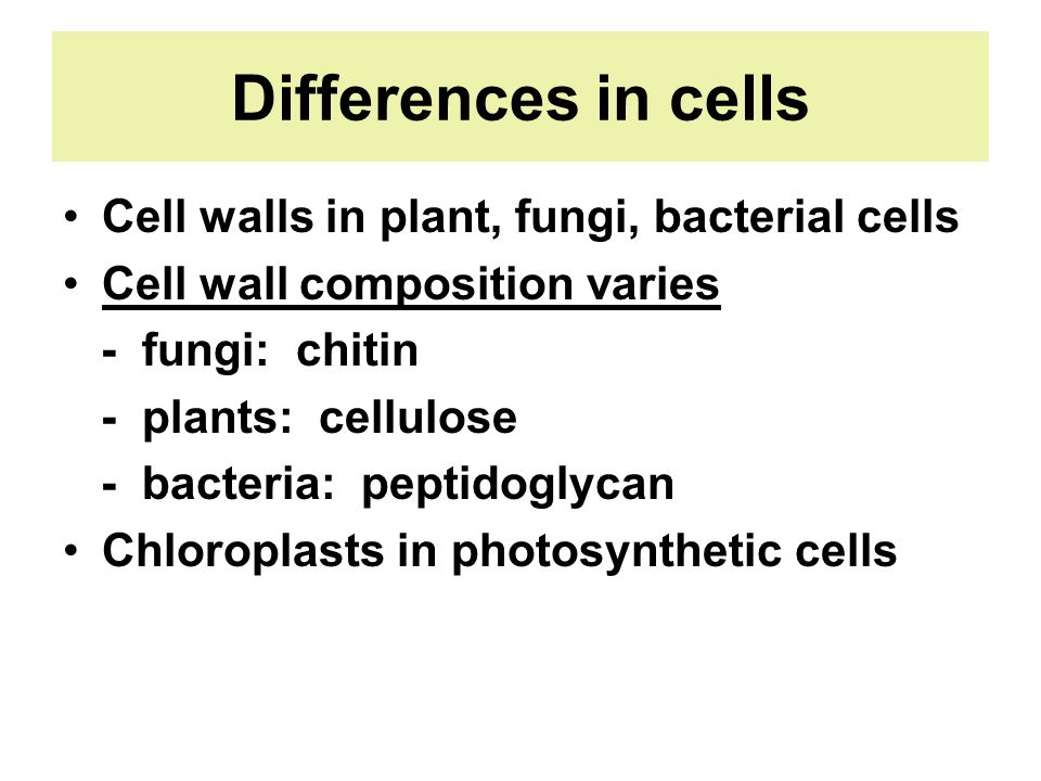 Differences in cells Cell walls in plant, fungi, bacterial cells
