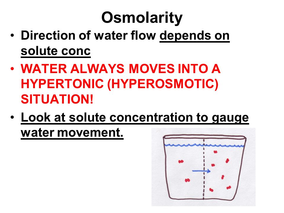 Osmolarity Direction of water flow depends on solute conc