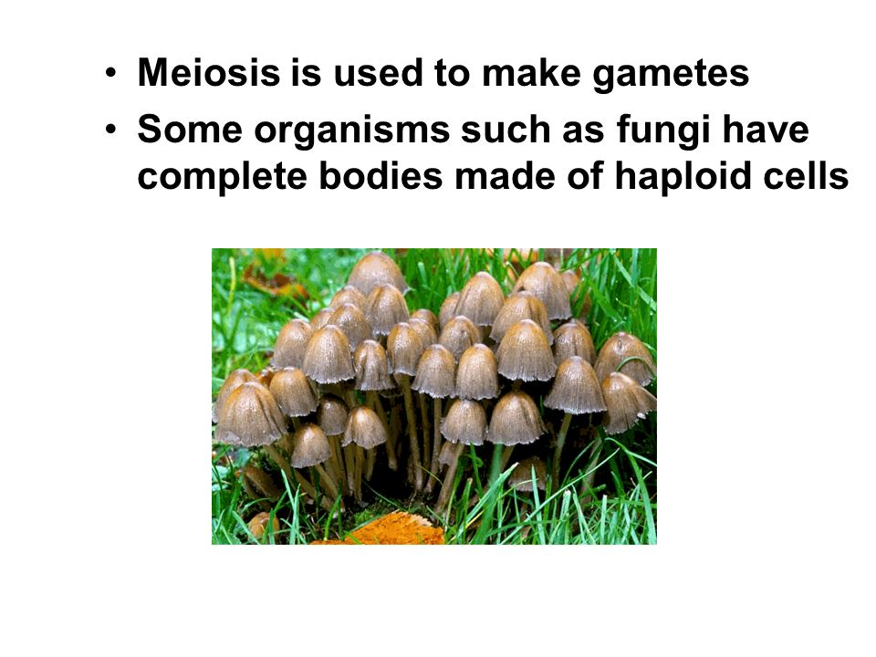 Meiosis is used to make gametes