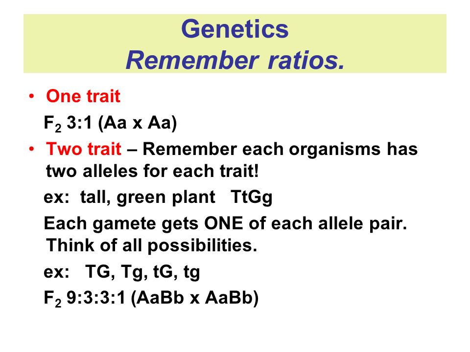 Genetics Remember ratios.