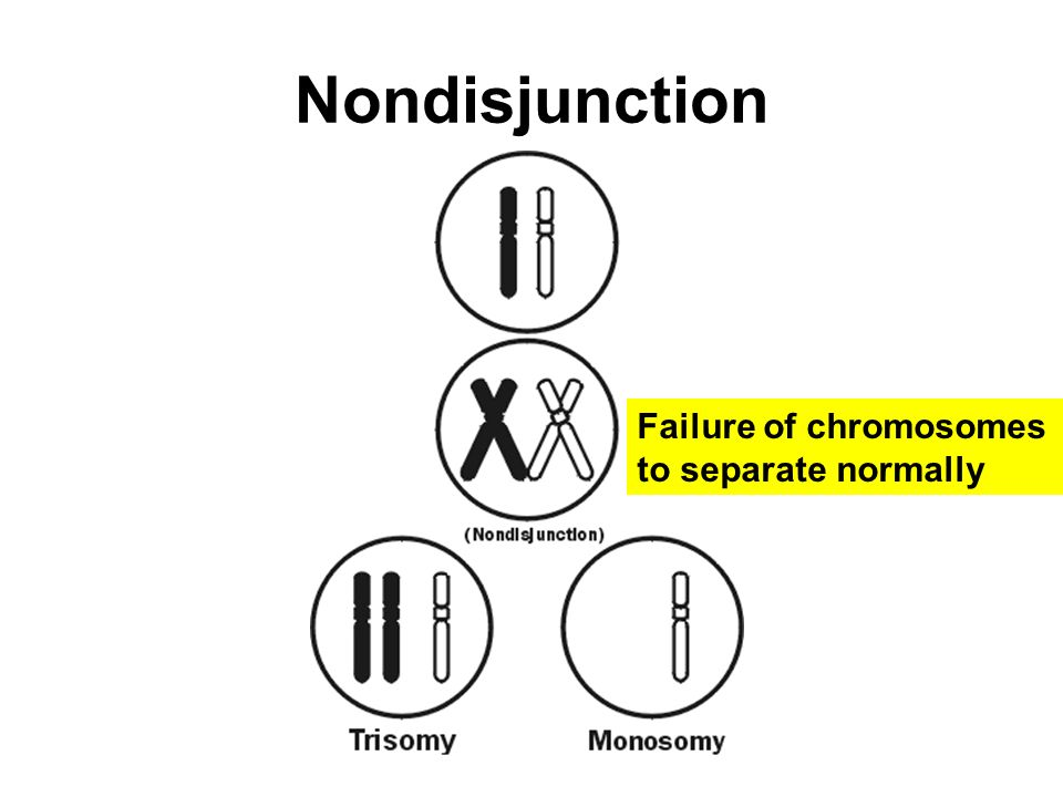 Nondisjunction Failure of chromosomes to separate normally