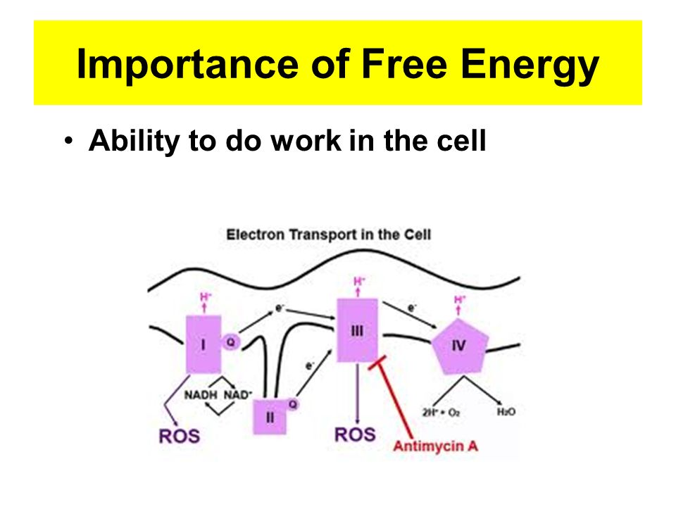 Importance of Free Energy