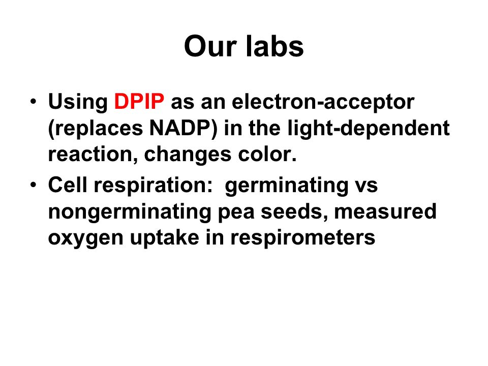 Our labs Using DPIP as an electron-acceptor (replaces NADP) in the light-dependent reaction, changes color.