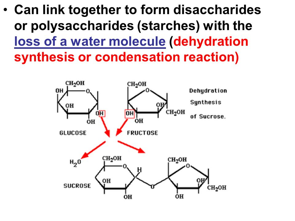 Can link together to form disaccharides or polysaccharides (starches) with the loss of a water molecule (dehydration synthesis or condensation reaction)