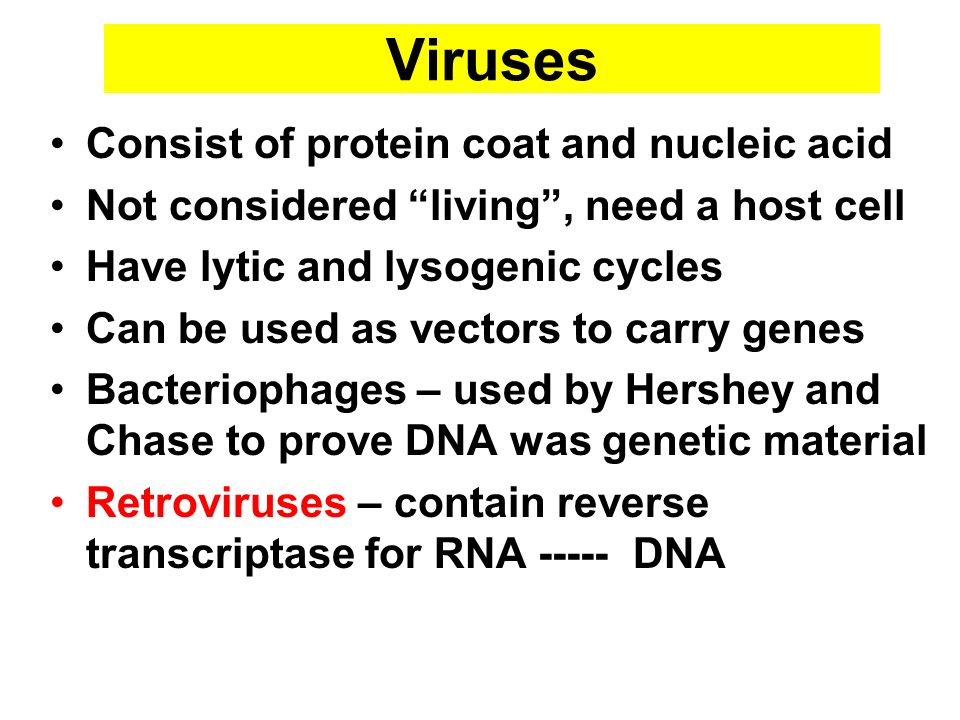 Viruses Consist of protein coat and nucleic acid