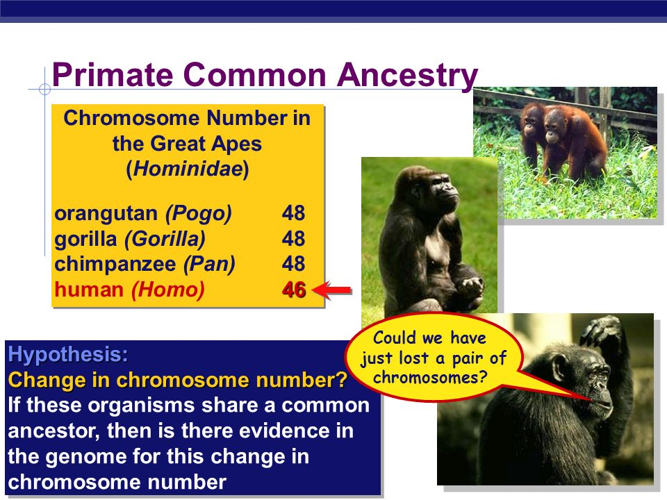 Primate Common Ancestry