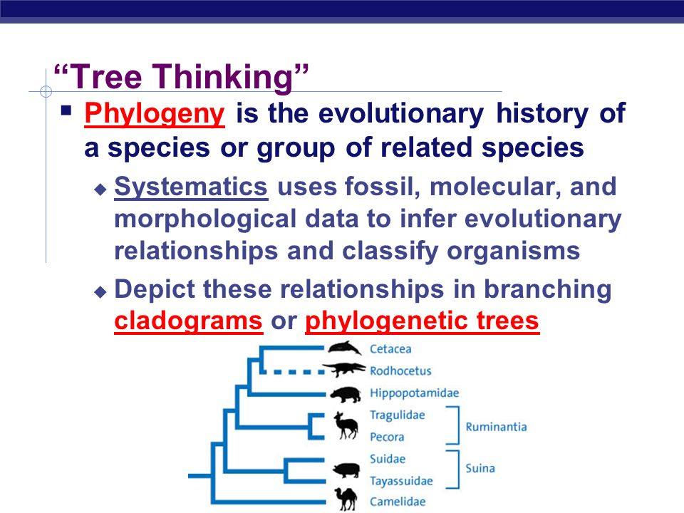 Tree Thinking Phylogeny is the evolutionary history of a species or group of related species.