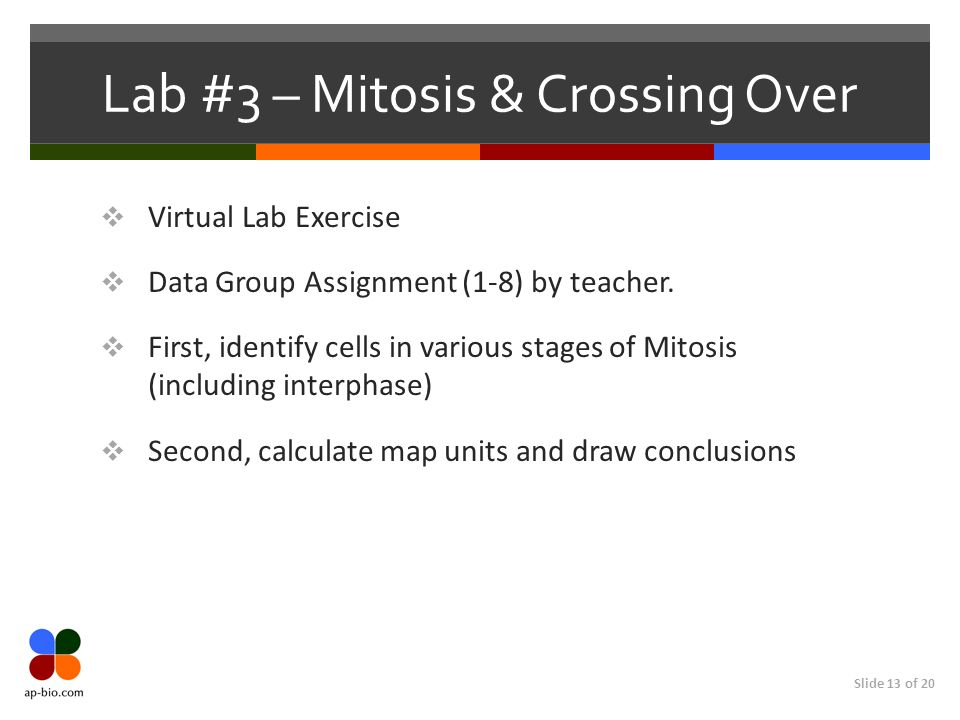 Lab #3 – Mitosis & Crossing Over