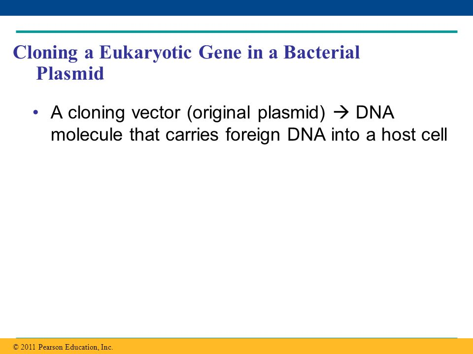Cloning a Eukaryotic Gene in a Bacterial Plasmid