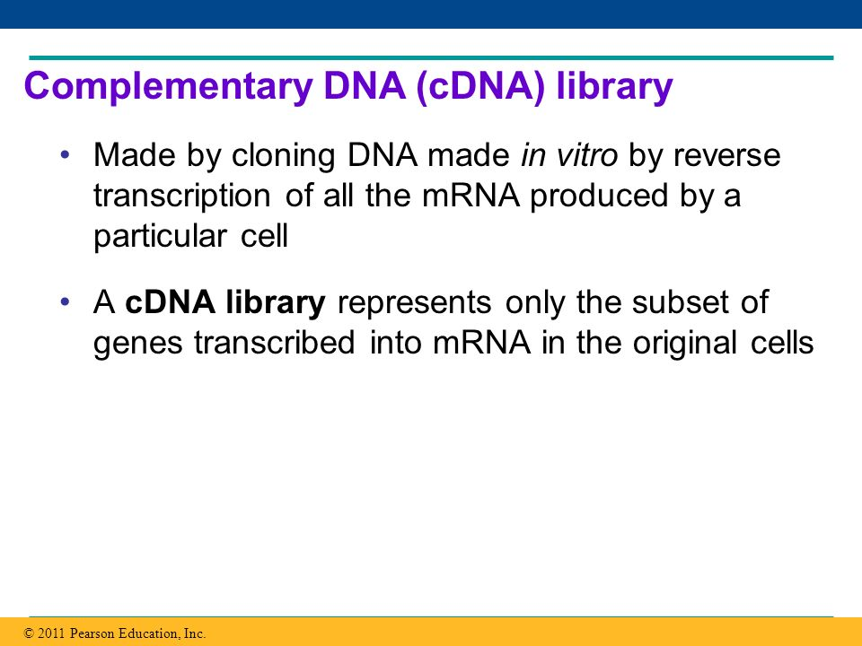 Complementary DNA (cDNA) library