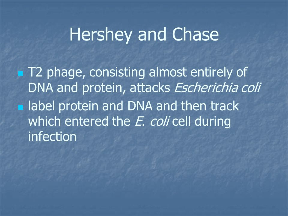 Hershey and Chase T2 phage, consisting almost entirely of DNA and protein, attacks Escherichia coli.