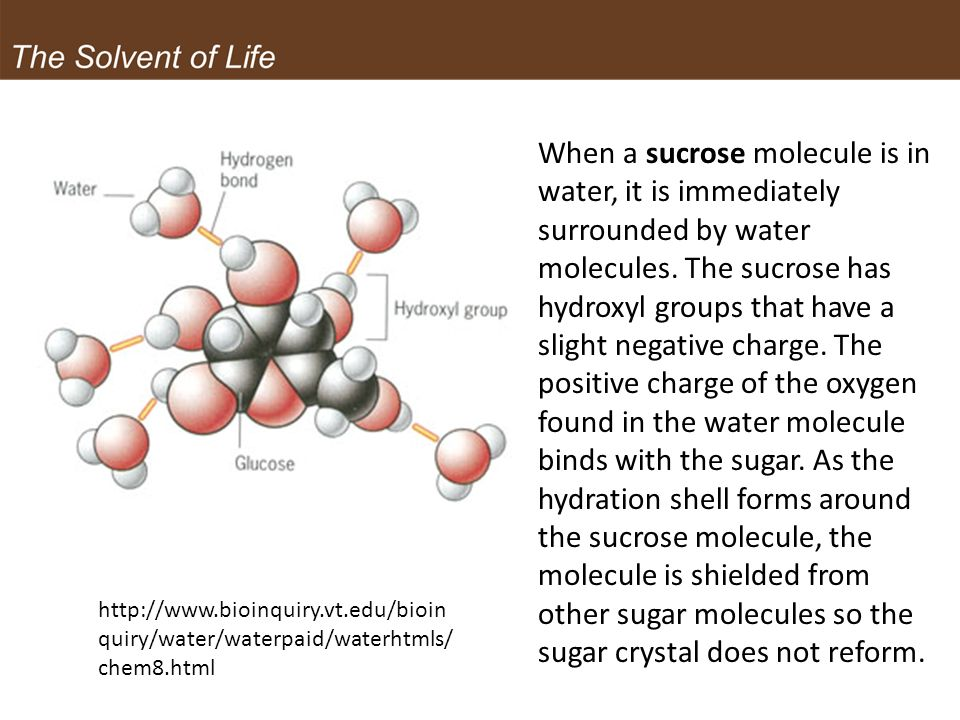 When a sucrose molecule is in water, it is immediately surrounded by water molecules. The sucrose has hydroxyl groups that have a slight negative charge. The positive charge of the oxygen found in the water molecule binds with the sugar. As the hydration shell forms around the sucrose molecule, the molecule is shielded from other sugar molecules so the sugar crystal does not reform.