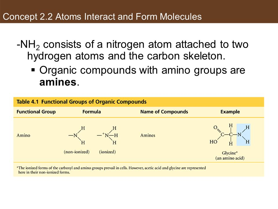 Organic compounds with amino groups are amines.