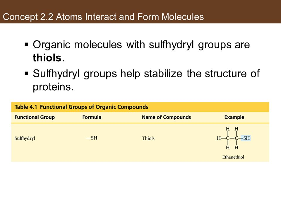 Organic molecules with sulfhydryl groups are thiols.