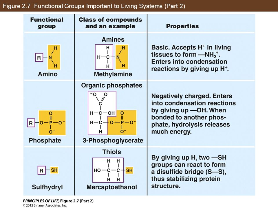 Figure 2.7 Functional Groups Important to Living Systems (Part 2)