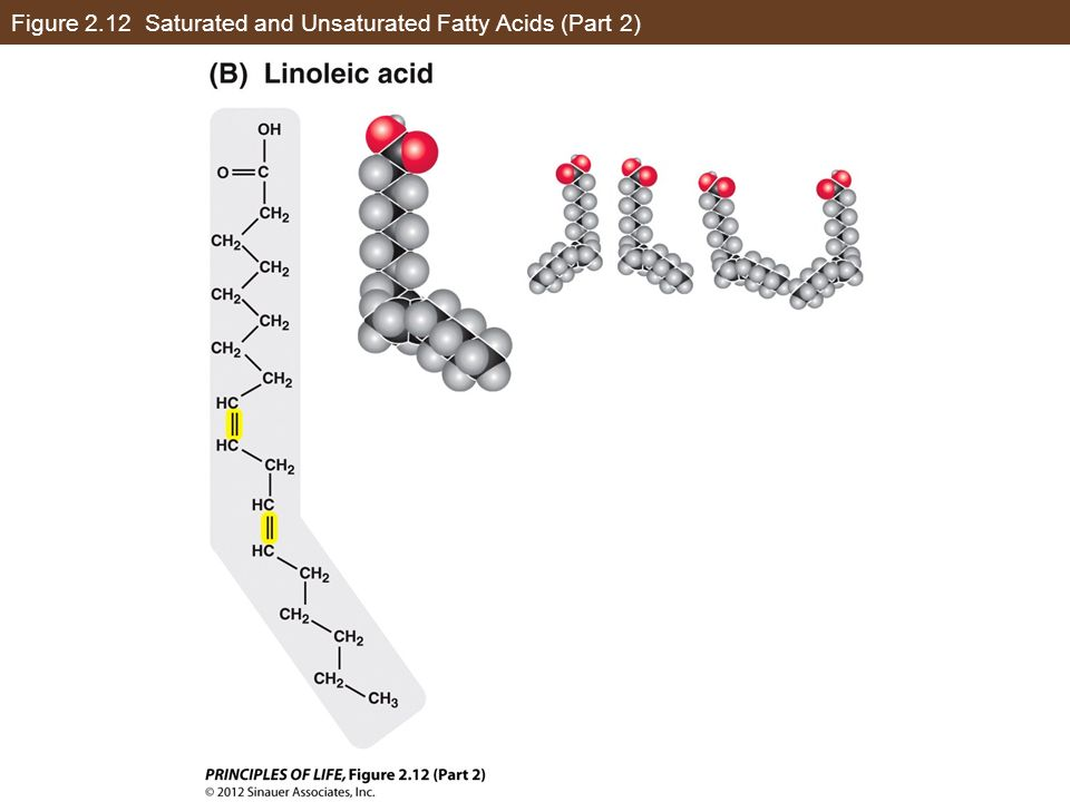 Figure 2.12 Saturated and Unsaturated Fatty Acids (Part 2)