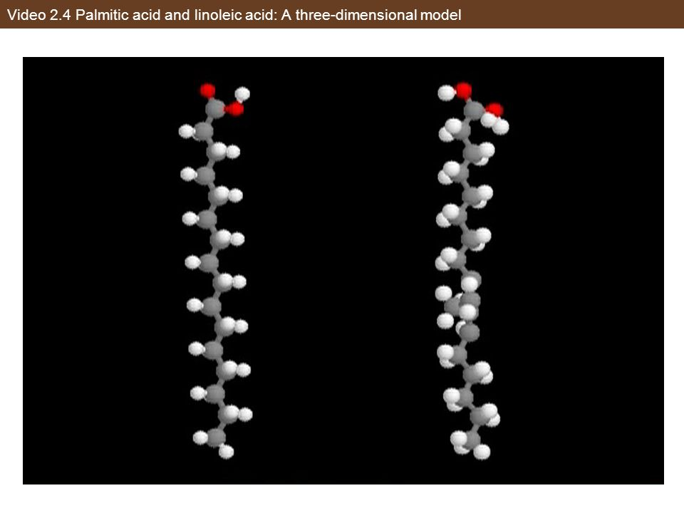 Video 2.4 Palmitic acid and linoleic acid: A three-dimensional model