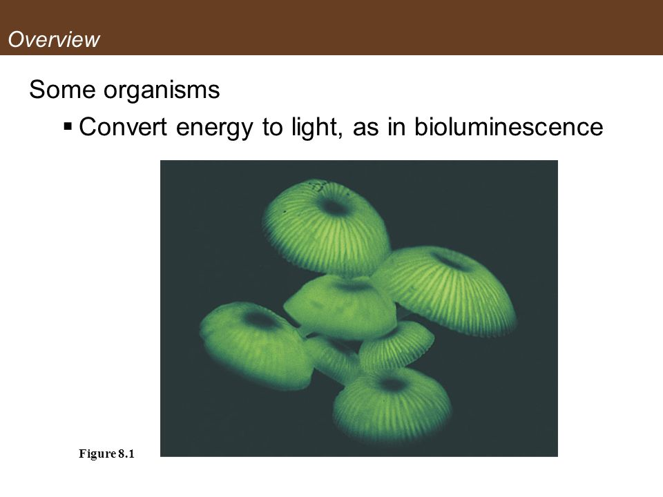 Convert energy to light, as in bioluminescence