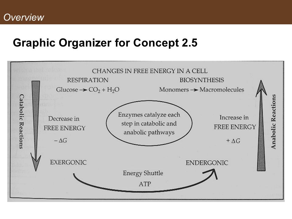 Graphic Organizer for Concept 2.5