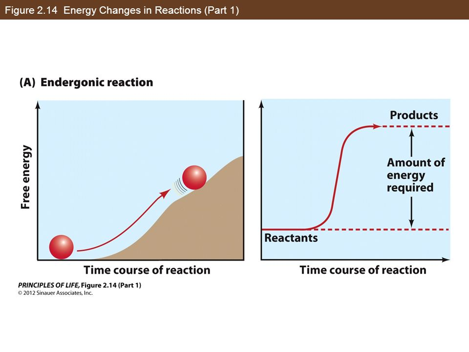 Figure 2.14 Energy Changes in Reactions (Part 1)