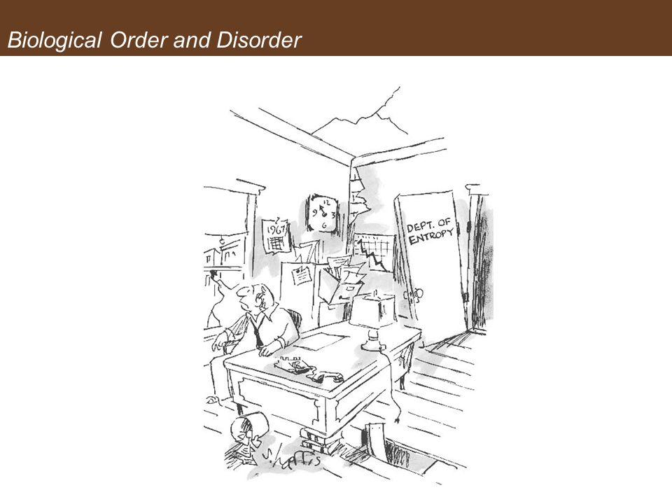 Biological Order and Disorder