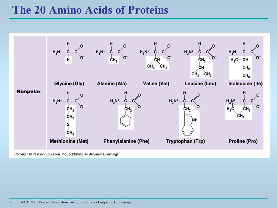 The 20 Amino Acids of Proteins