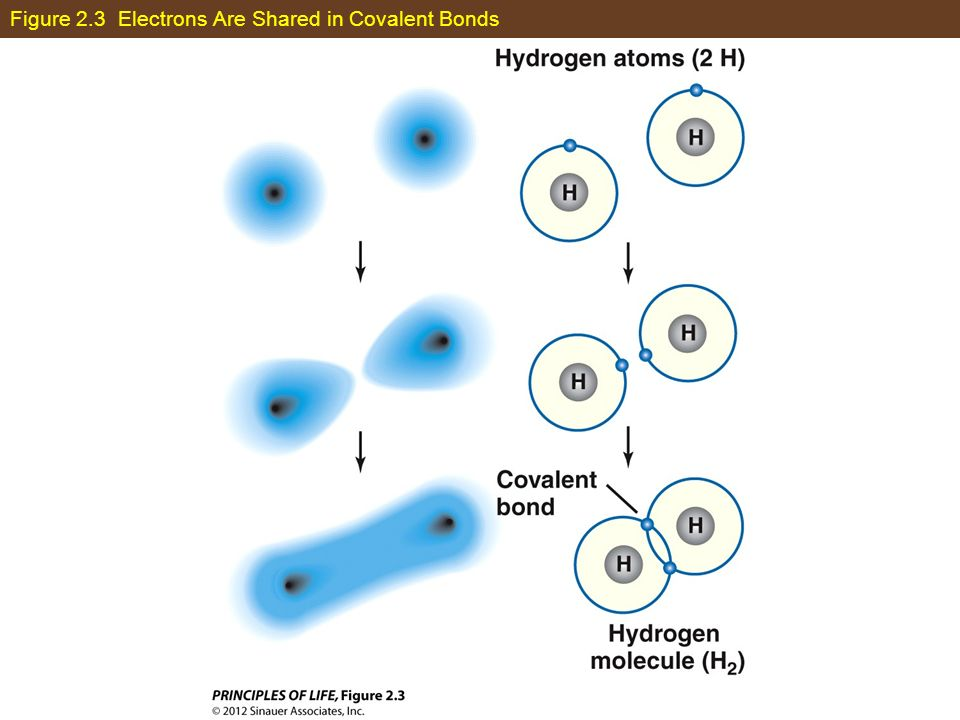 Figure 2.3 Electrons Are Shared in Covalent Bonds