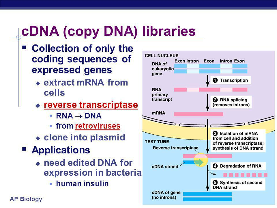 cDNA (copy DNA) libraries